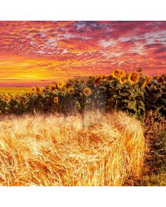 Sunflower Grass Computer Printed Photography Backdrop ABD-559