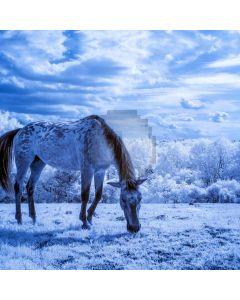 Christms Animal Snow Computer Printed Photography Backdrop ABD-565