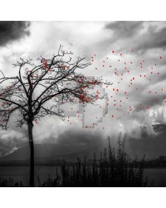 Tree Cloudy Weather Computer Printed Photography Backdrop ABD-755