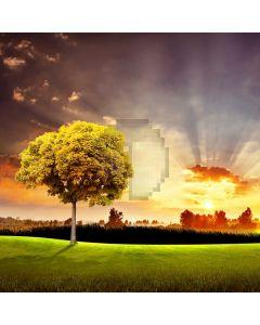 Tree Sunlight Grassland Computer Printed Photography Backdrop ABD-776