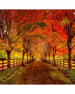 Road Autumn Fence Computer Printed Photography Backdrop ABD-788