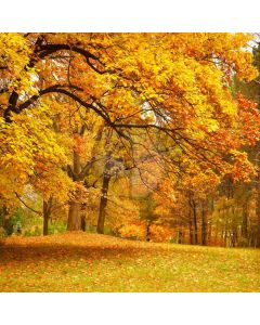 Autumn Forest Computer Printed Photography Backdrop CM-6771