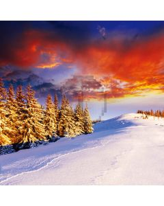 Snow scene Computer Printed Photography Backdrop DT-11-236
