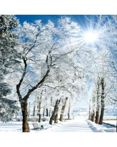 Snow woods Computer Printed Photography Backdrop DT-11-237