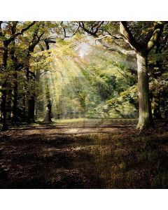 Sunshine Through The Woods Computer Printed Photography Backdrop HY-CM-3373
