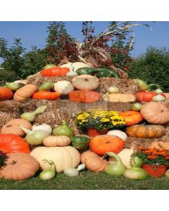 Pumpkins And Calabash Computer Printed Photography Backdrop LMG-096