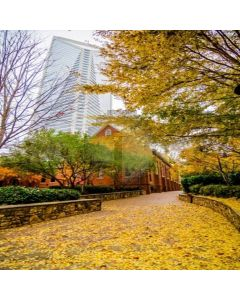 Street With Leaves Computer Printed Photography Backdrop LMG-101