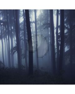 Foggy Forest Computer Printed Photography Backdrop LMG-107
