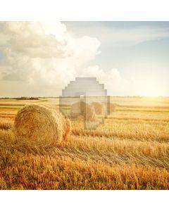 The Harvest Season Computer Printed Photography Backdrop LMG-110