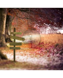 Lonely Path  Computer Printed Photography Backdrop S-086