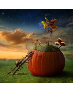 A Story Of Pumpkin  Computer Printed Photography Backdrop S-487
