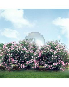 Spring Coming  Computer Printed Photography Backdrop S-511