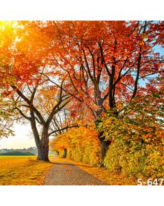 Pretty Autumn Tree Computer Printed Photography Backdrop S-647
