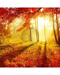 Forest Warm Sun Computer Printed Photography Backdrop XLX-098