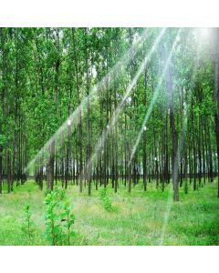 Lush Forest Computer Printed Photography Backdrop XLX-255