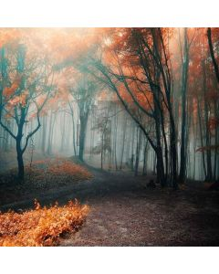 Foggy Forest Computer Printed Photography Backdrop XLX-624