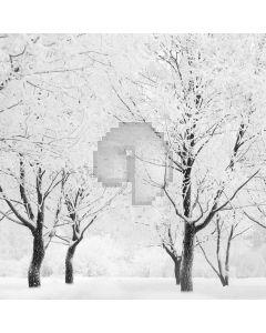 Real Winter Snow Digital Printed Photography Backdrop YHA-054