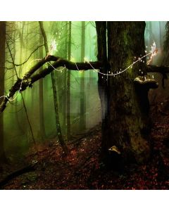 Fairy Forest Digital Printed Photography Backdrop YHA-295