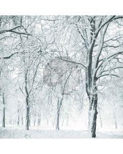 Snowy Forest Digital Printed Photography Backdrop YHA-506