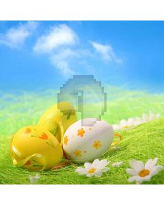 Lovely Eggs Digital Printed Photography Backdrop YHB-145