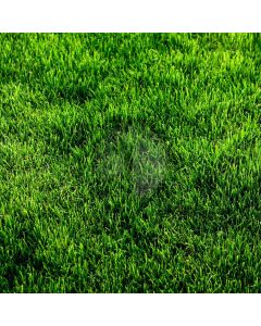 Lawn Computer Printed Photography Backdrop YKY-015