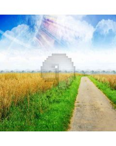 Road In Field Computer Printed Photography Backdrop ZJZ-147
