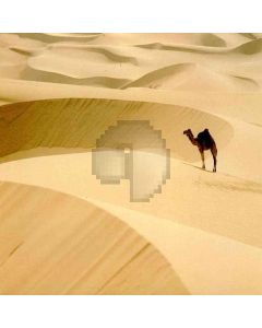 Camel In The Desert Computer Printed Photography Backdrop ZJZ-378