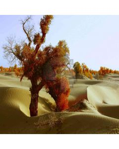 Desert Trees  Computer Printed Photography Backdrop ZJZ-381