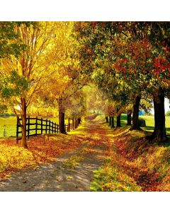 Autumn Leaves Computer Printed Photography Backdrop ZJZ-868