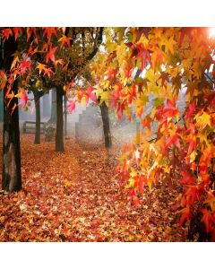 Charming Autumn  Computer Printed Photography Backdrop ZJZ-922