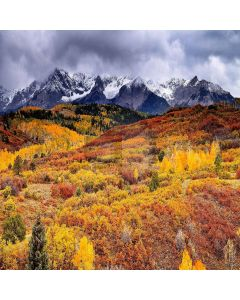 Autumnal Scenery  Computer Printed Photography Backdrop ZJZ-928