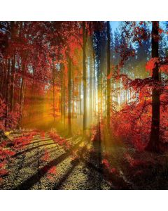 Sunny Forest  Computer Printed Photography Backdrop ZJZ-931