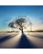 Desert Tree Light Computer Printed Photography Backdrop ABD-710