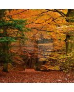 Autumn Forest Computer Printed Photography Backdrop LMG-102
