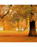 Autumn Tree Computer Printed Photography Backdrop S-1979