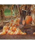Pumpkins Computer Printed Photography Backdrop S-1989