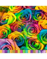 Colorful Rose Computer Printed Photography Backdrop S-971