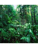 Tropical Rainforest Computer Printed Photography Backdrop YKY-084