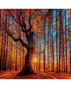 Autumn Forest Computer Printed Photography Backdrop LMG-022