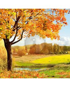 Beautiful Autumn Computer Printed Photography Backdrop XLX-091