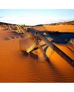 Boundless Desert Computer Printed Photography Backdrop DGX-473