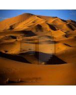 Desert Amorous  Computer Printed Photography Backdrop ZJZ-376
