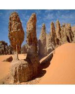 Sahara Desert  Computer Printed Photography Backdrop ZJZ-384