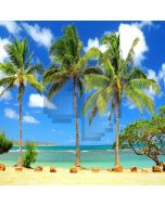 Tropical Beach Computer Printed Photography Backdrop ZJZ-866